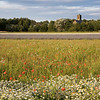 Rainford Poppy Fields 1