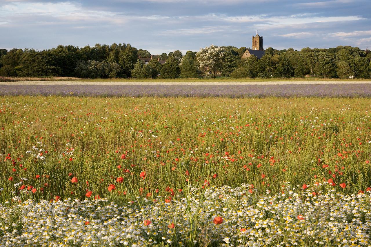Rainford Poppy Fields 1