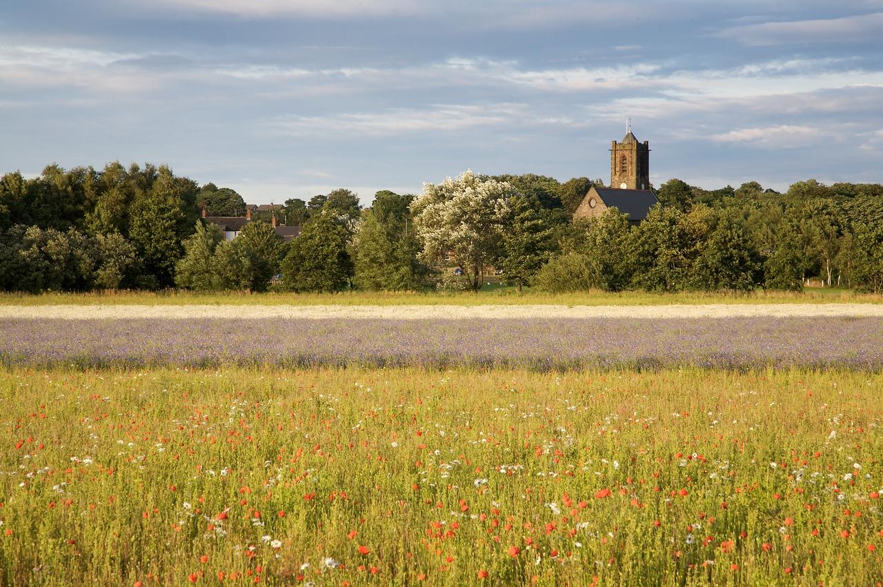 Rainford Poppy Fields 2