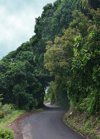 A narrow stretch of the Hana Highway cuts right through the rainforest canopy.