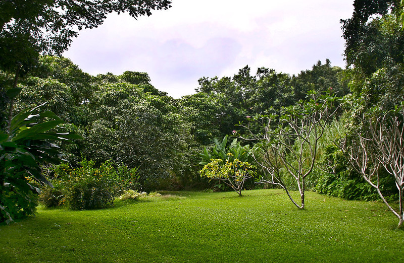 A typical scene at the Hana Maui Botanical Garden, Ulaina Road outside of Hana, east Maui.