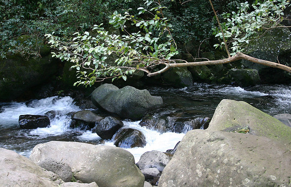 "Iao Stream in the West Maui Mountains.   As part of his campaign to unite all the islands, in 1790, King Kamehameha I attacked Kahului village, driving the defenders up into the steepest parts of the valley. They were mercilessly slaughtered at a place called Kepaniwai (""the Damming of the Waters""), where the bodies of the fallen choked the Iao Stream, causing its waters to run red with their blood."