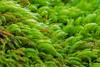 Rainforest Moss @ Binna Burra