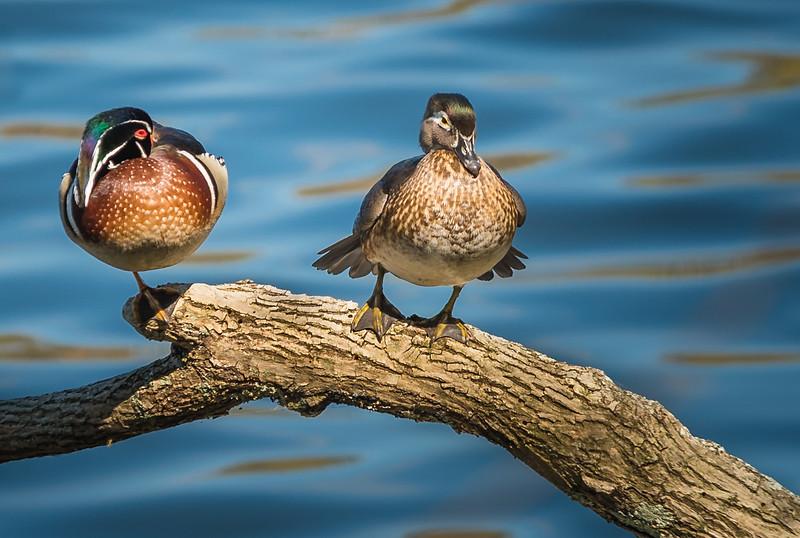 """Birds of a feather"" www.rajguptaphotography.com"