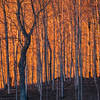 """Fire in the trees""  <a href=""http://www.rajguptaphotography.com"">http://www.rajguptaphotography.com</a>"