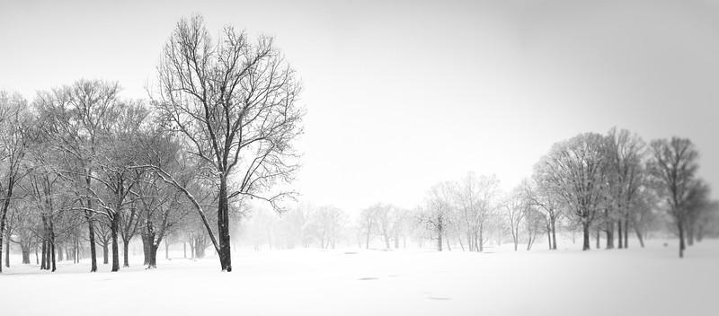 Dreamy Snowy Morning