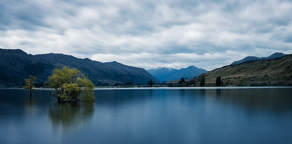 The Other Wanaka Trees