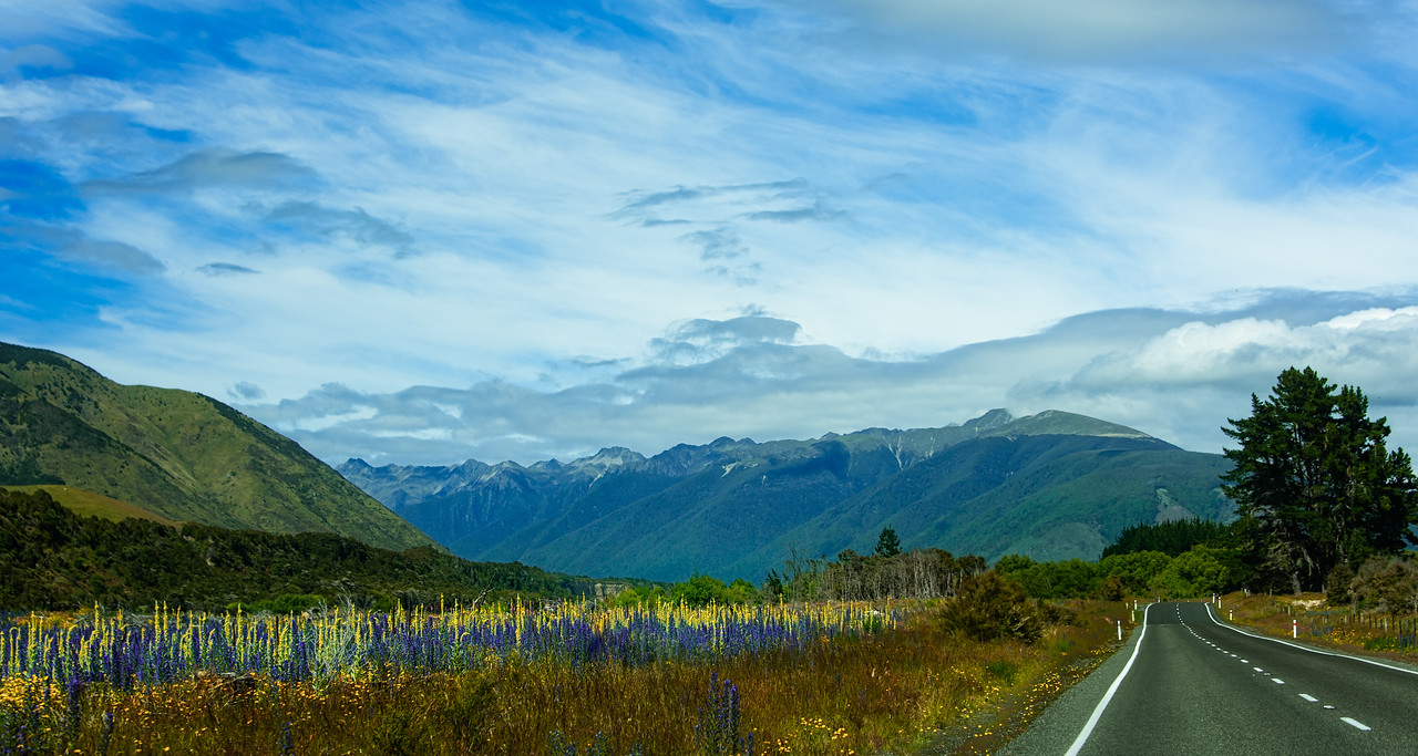 Lupine road