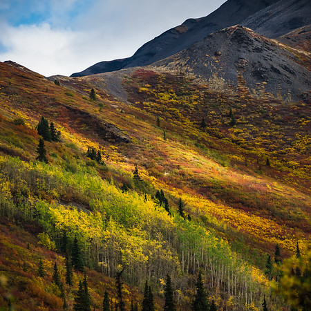 """""""Colors down the slope"""" - www.rajguptaphotography.com"""