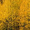 """Pop of color"" - www.rajguptaphotography.com"