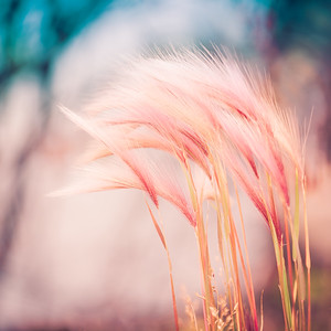 """In the Wind"" - www.rajguptaphotography.com"