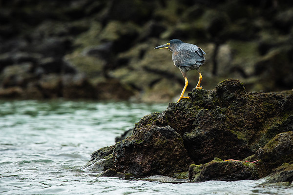 Perched for fish