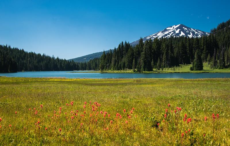 Todd Lake Flowers
