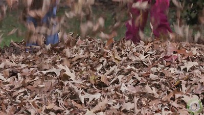 Leaf Play Video