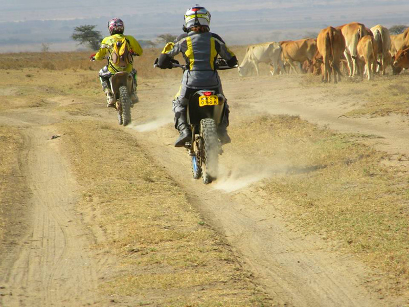 We slow down every time we pass wildlife. Here are some cattle at the Soysambu Conservancy in Kenya where you can ride among wildlife.