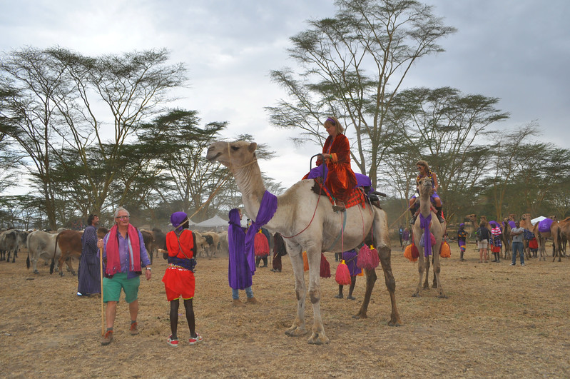 Camels gathered for the procession at Soysambu Wild Festival supporting wildlife and peace.