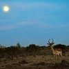 This was my first wildlife siting at 5:30a in the morning on my taxi ride to Kitengela under a full moon. This was right after my 4 days of travel. I then dropped my bags and Lorraine and I went for a walkabout. I then saw my first giraffe, wart hogs, baboons and Tompson gazelles. AMAZING!!!