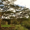 Africa's famed Acacia trees light up my soul.