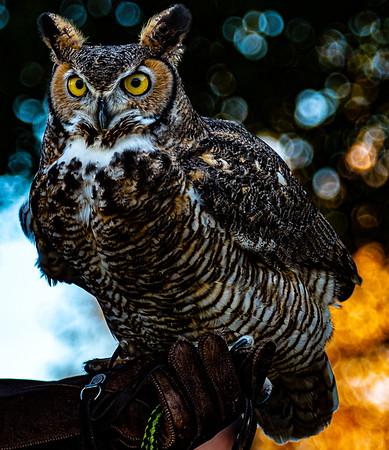 Ramona Hawk Watch 2020