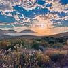Misty Morning - Valley of the Sun | Ramona, CA
