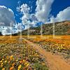 Ramona Wildflowers II - Ramona, CA