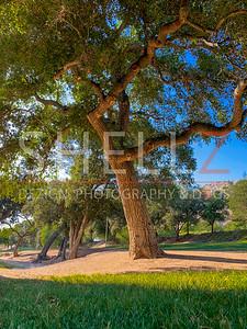 Solid Growth - Ramona Oaks Park