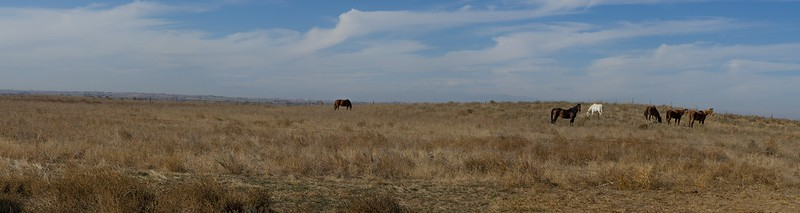 Alycia C: Panorama 2