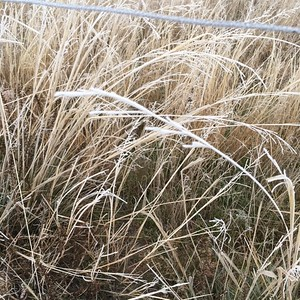 November 2017 Ranch Photo A Day- Day 2 A touch of Frost