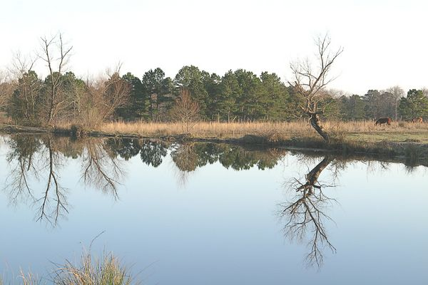Ranch Ponds