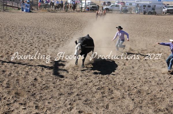 Wild Cow Milking