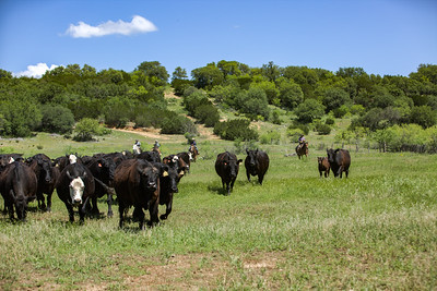 Link Ranch 2015
