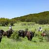 20150430-2015 Link Ranch-309