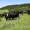 20150429-2015 Link Ranch-65