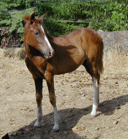 Briosa at 3 months