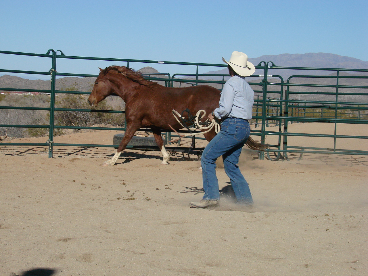 Briosa moving in round pen