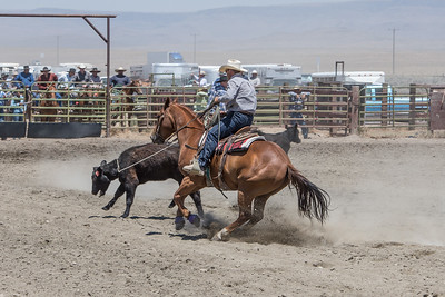 Muley team roping