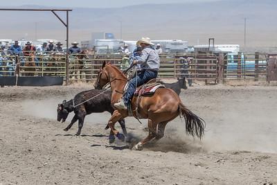Muley team roping