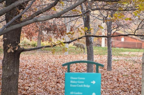 Nov. 27, 2012 - Rancho San Rafael