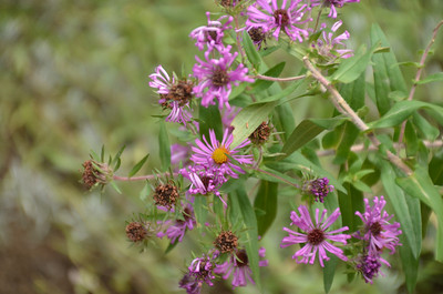DSC_0140_Purple_Flowers