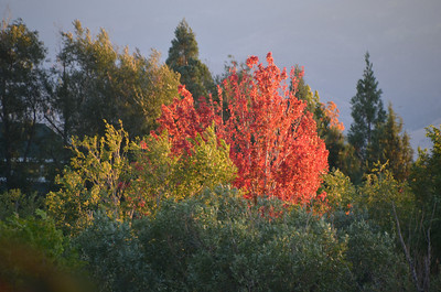 DSC_0348_Red_Fall_Colors