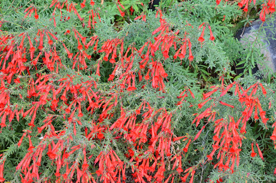 DSC_0149_Red_Flowers