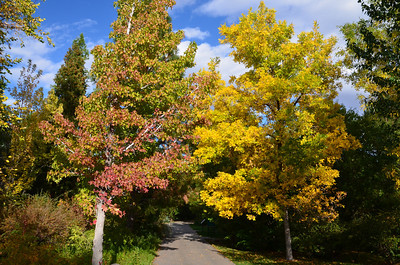 DSC_0187_Trees_along_path_fall_colors