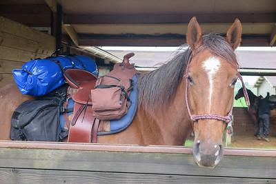 rando à cheval Bourgogne 2016