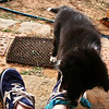 Pup attacks my shoelaces