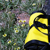 Ortlieb panniers on the LHT match the daisies