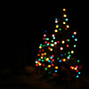 <b>16 Dec 2009</b> Bokeh Christmas trees (around town)