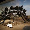 <b>11 Sept 2010</b> Stegasaurus, Royal Tyrrell Museum, Drumheller