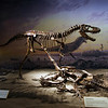 <b>11 Sept 2010</b> Albertosaurus, Royal Tyrrell Museum, Drumheller
