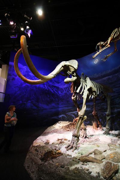 <b>11 Sept 2010</b> Woolly Mammoth! Royal Tyrrell Museum, Drumheller