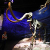 <b>11 Sept 2010</b> Woolly Mammoth! Royal Tyrrell Museum, Drumheller